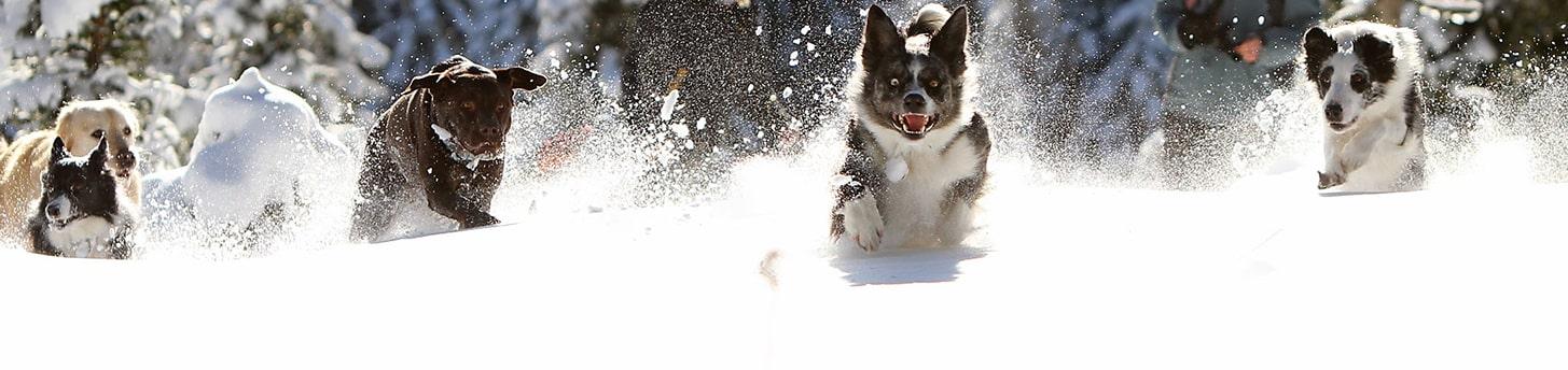 header_bg_dogs1